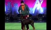 Kadir ve Redford'un Köpek Şovu