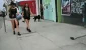 Farelerden korkuyorsanız bu videoyu mutlaka izleyin!
