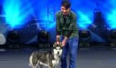 Ömer ve Paşa köpek gösterisi