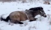 Kar gören masum atın sevimli halleri!