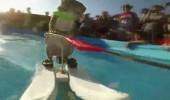 Su kayağı yapan sincap ilgi odağı oldu!