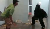 Tuvalette goril görseniz ne yapardınız?