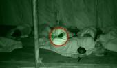 Çılgın Sedat'a fare şoku! Kafasına tırmanarak uyandırdı...