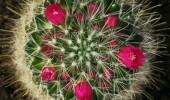 Doğadaki en zehirli bitkiler