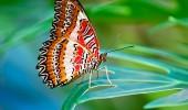Kelebek etkisi nedir?