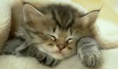 Kedilerin ilginç özellikleri