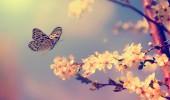Kelebeklerin ömrü gerçekten bir gün mü?