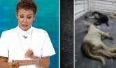 Dünya Hayvan Haklarını Koruma Günü'nde vahşet