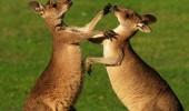 Farklı savunma teknikleri olan hayvanlar