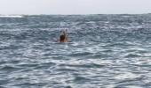 TV'de Yok | Ümit Karan balık avında!