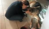 Lale Cangal ölen köpeği için helva dağıttı