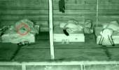Hakan'dan yatağına giren fareye olay müdahale!