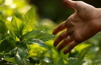 Japonya'daki intihar ormanı şaşırtıyor!