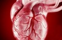 Üç kalpli canlı olur mu demeyin!
