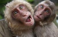 Bilim insanlarını hayrete düşüren 'maymun' deneyi!