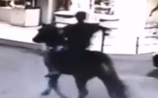 Brezilya'da bir şahış atla benzinci soydu
