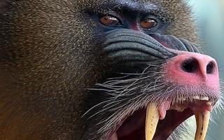 İstanbul'da maymun dehşeti!