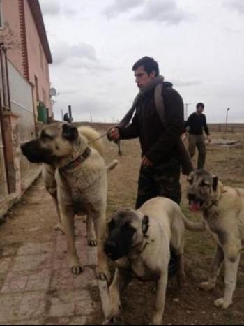 İbrahim Çelikkol Köpeklerini sete götürdü, kriz çıktı!