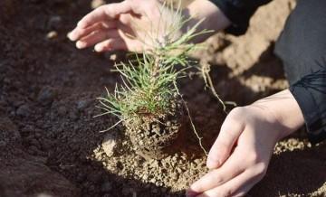 OGM ve TEMA fidan bağışı nasıl yapılır?