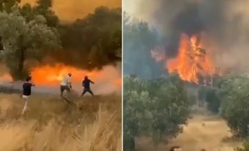 Yanan kozalaklar farklı yerlere fırlayarak yangını saniyeler içinde büyüttü