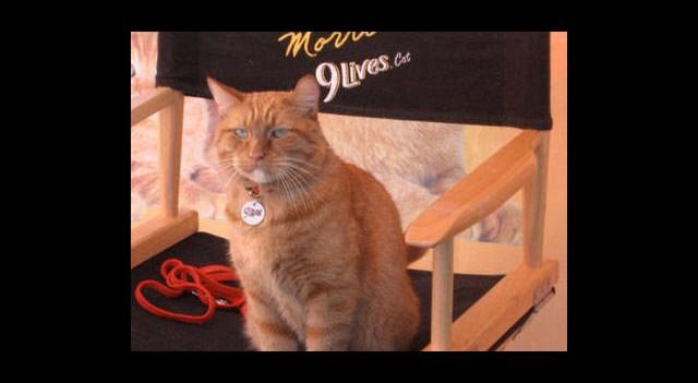 Kedi Filmleri Festivali Başlıyor