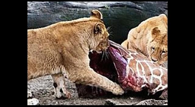 Yılda 5 bin hayvan öldürülüyormuş!