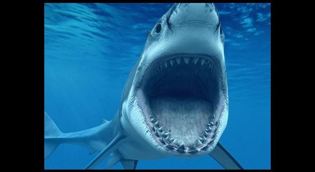 Bu Köpekbalığı Tweet Atıyor
