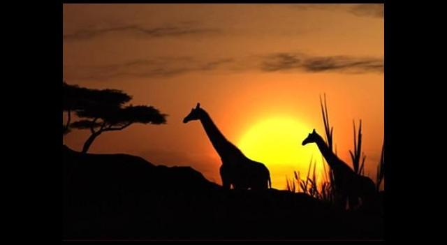 Afrikaya 33 milyar dolarlık yatırım