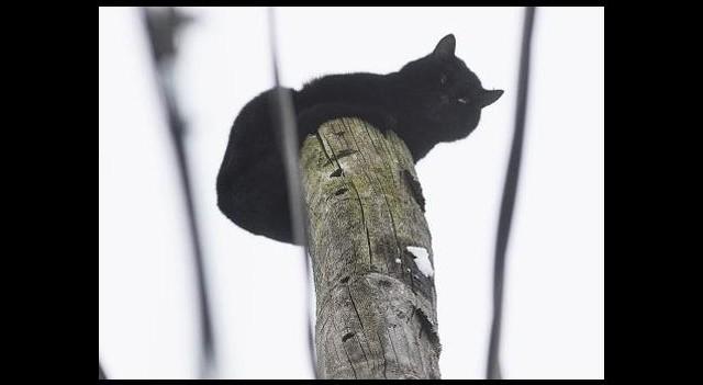 Zavallı kedi günlerce kurtarılmayı bekledi!