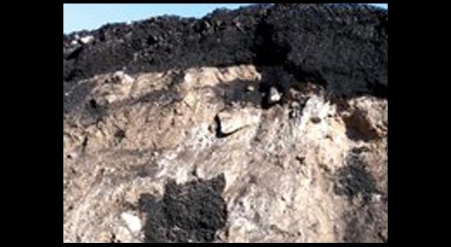 Taşı, Toprağı Kömür Yaptı!