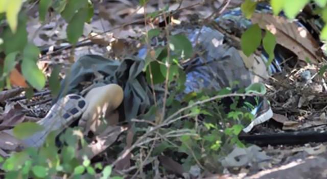 Döve döve öldürüp bahçeye attılar