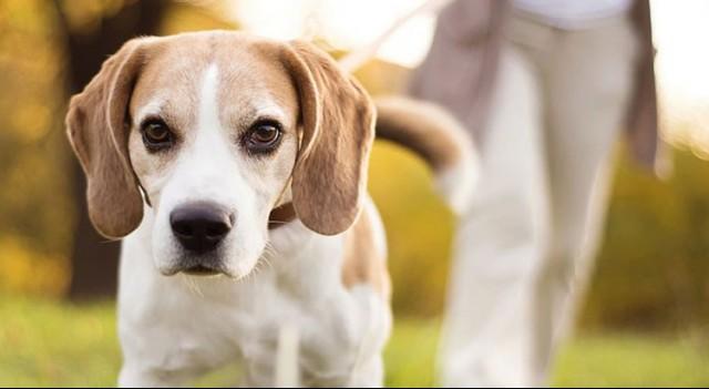Evcil hayvan sahiplerini buluşturan uygulama çıktı