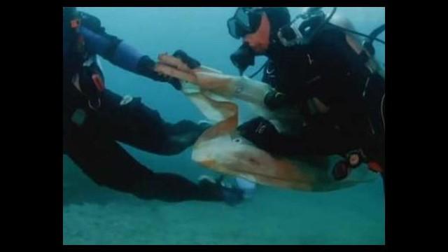 Köpekbalığını kurtarma operasyonu!