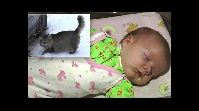 Kahraman kedi bebeğin hayatını kurtardı! Donmak üzereyken...