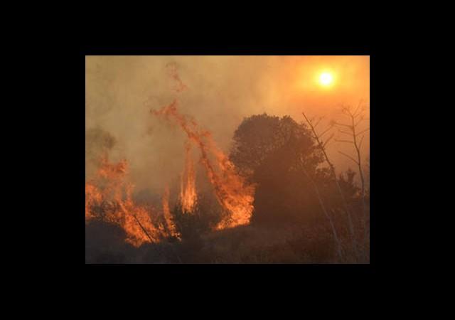 Bodrum'da Yangın!