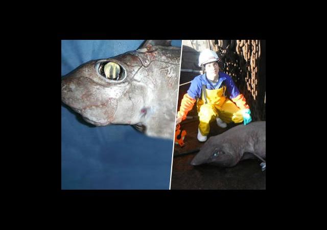Yeni Köpekbalığı Türleri Keşfedildi