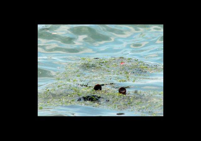 Denizlerdeki Kirlilik Dış Kaynaklı