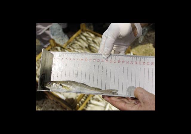 2 Günde 8 Ton Balığa El Konuldu