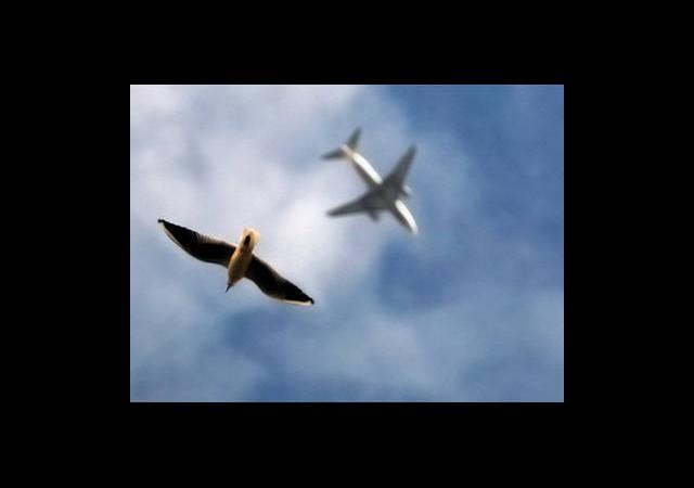 Yeni Havalimanına Yerli Kuş Radarı
