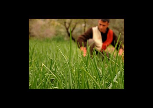 Tarım Desteklemelerine Yoğun İlgi
