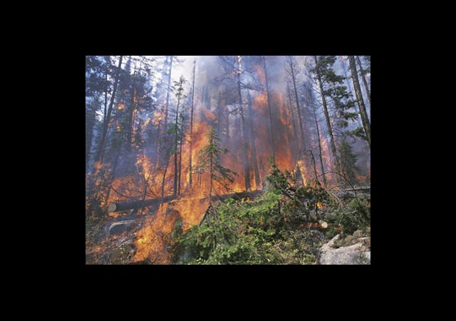 Orman Yangın İle Başedemiyor!