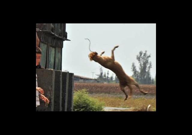 Köpeğe Zincirli İşkence!