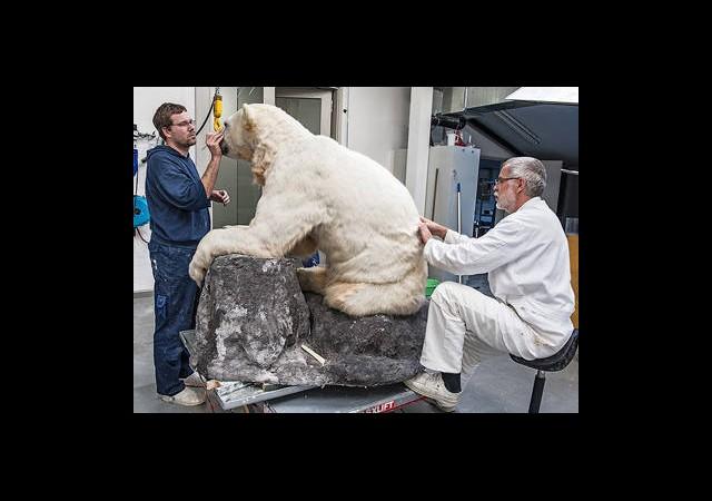 Sevimli Knut Böyle Ölümsüzleşti