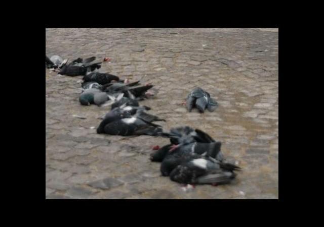 14 kuşu ezdi 13 bin lira ceza kesildi