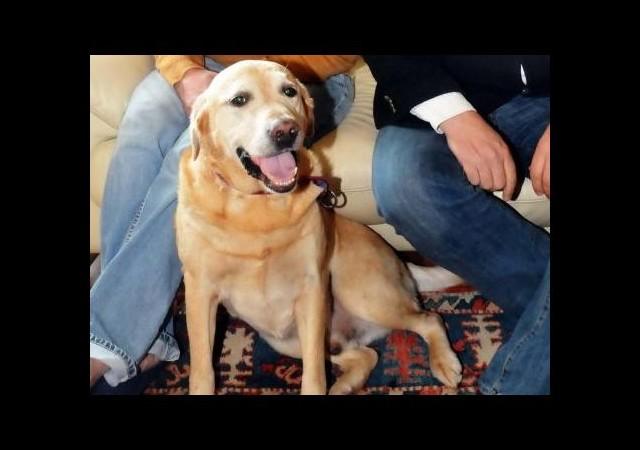 Bin liralık borcu için köpeğini haczettiler