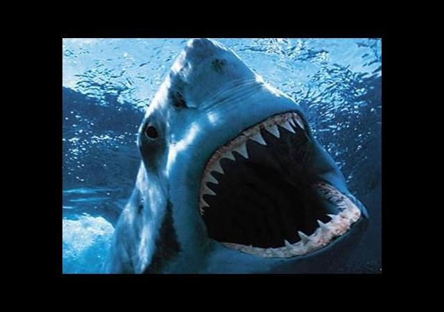 Dünyaca ünlü sahilde köpek balığı paniği!