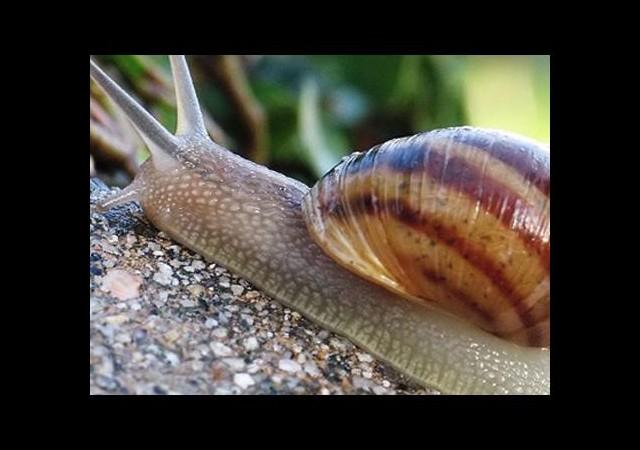 Kabuğu Bile Milyonlarca Avro Kazandırıyor
