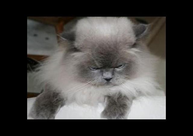 Asabi kedi sahiplerini eve hapsetti