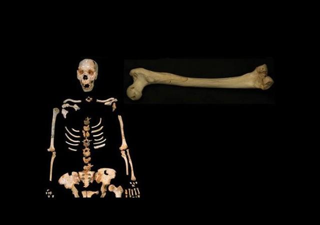 400 Bin Yıllık DNA Bulundu