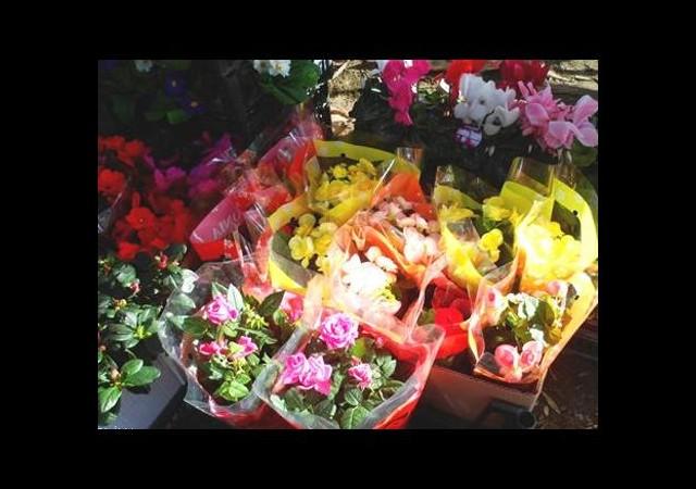 Hangi çiçek ne ifade ediyor?
